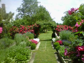 organic lawn care, holganix, compost tea, bio stimulant, biological meta-catalysts
