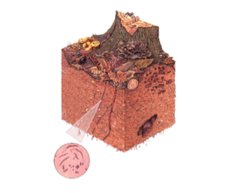Compost tea, soil food web, lawn care, microrganisms in the soil, Holganix, lawn care