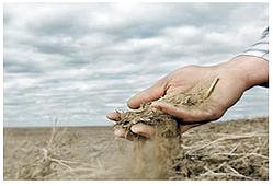 sand based soil, sandy soil, soil structure, Holganix