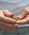 clay based soils, clay soil, Holganix, soil structure
