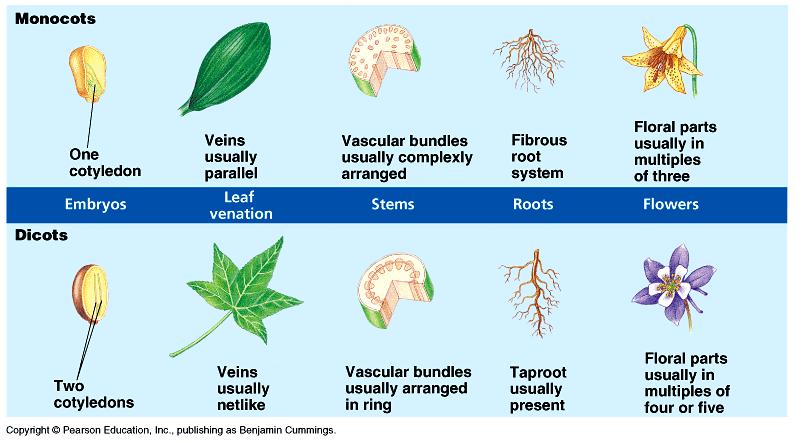 The Science Behind Holganix: Monocots vs Dicots: What You ... 10 Examples Of Monocot Plants