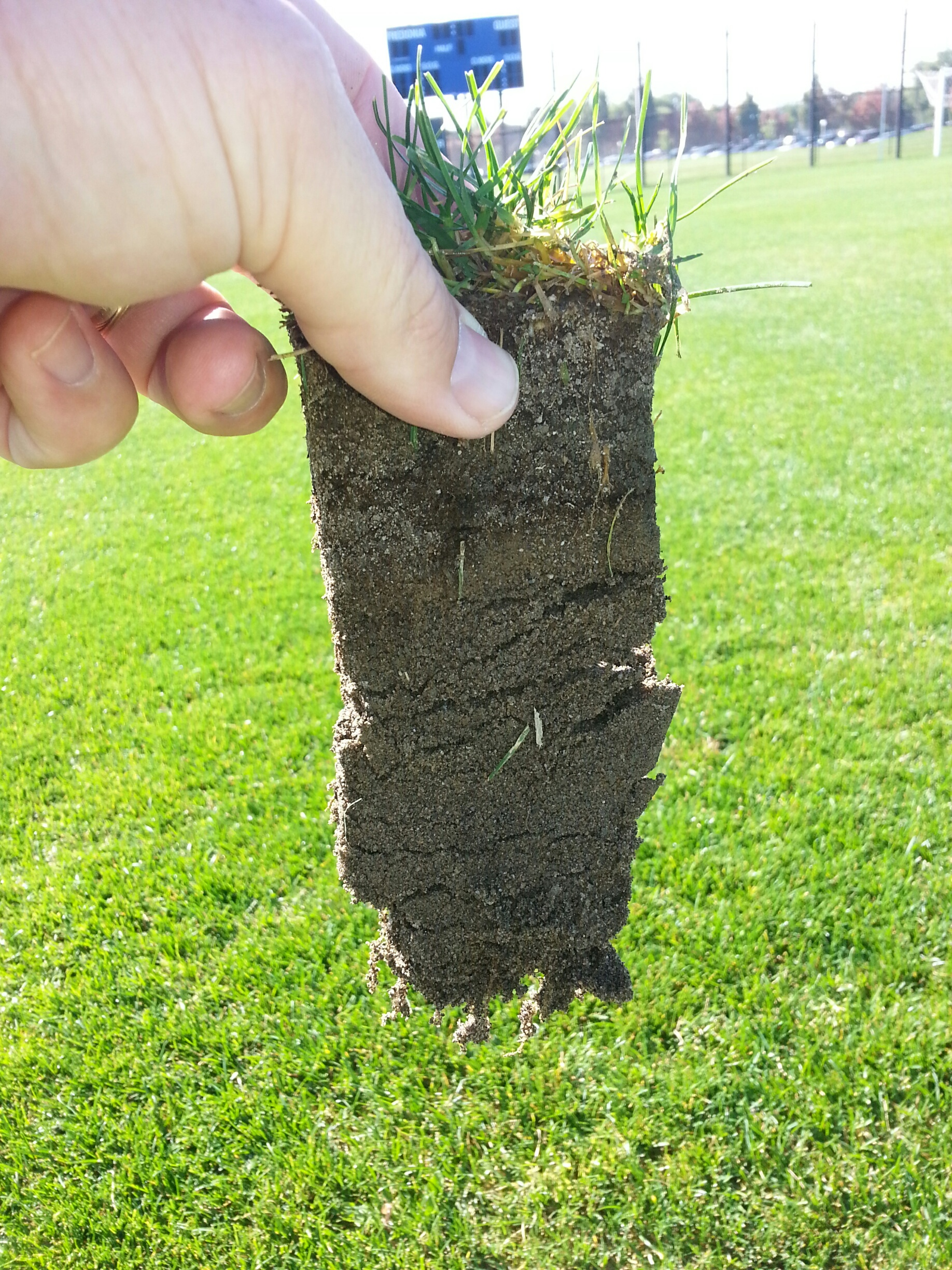 sports turf fertilizer