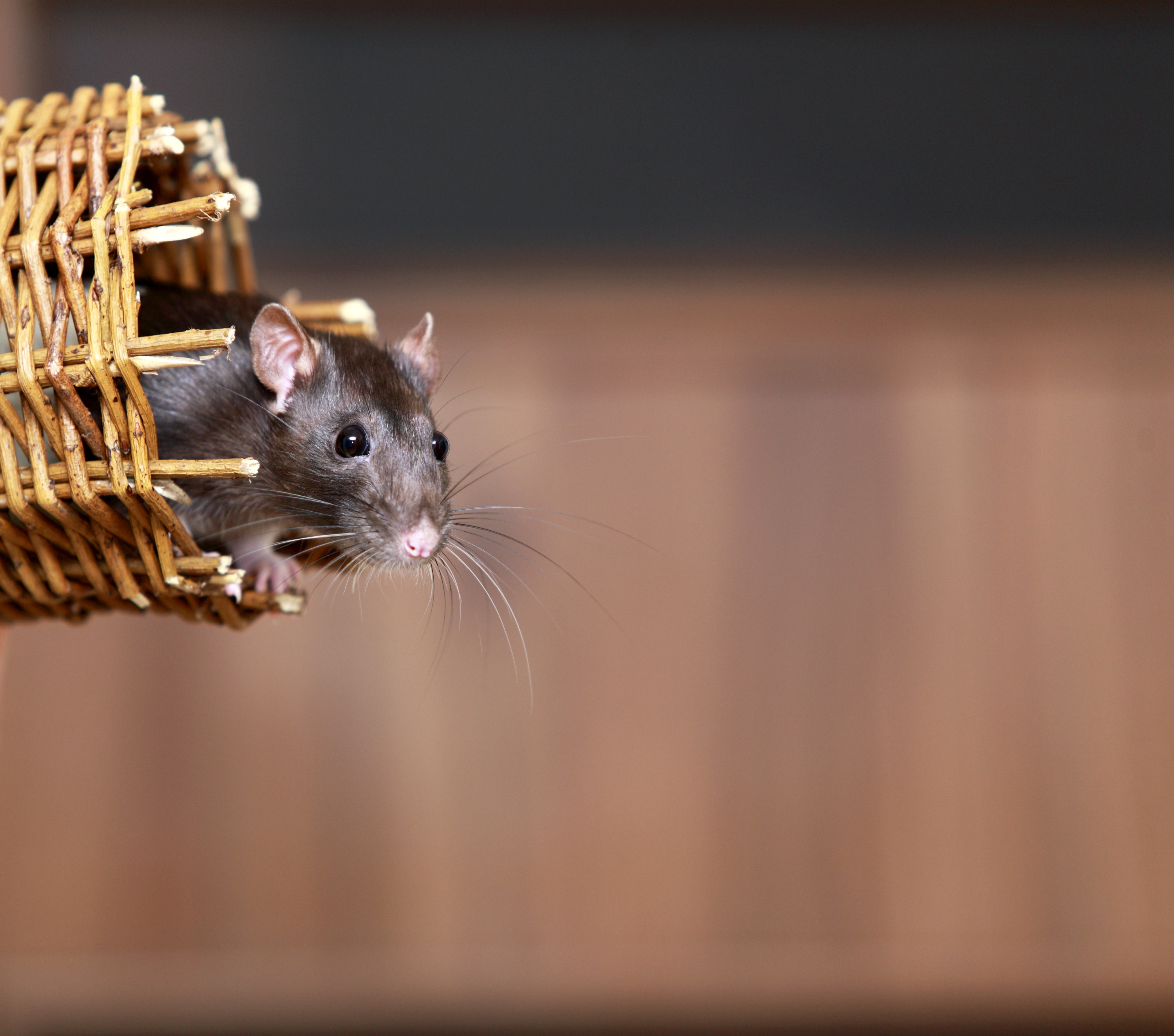 Marketing Hints and Tips: Get out of the rat race!