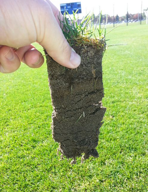 Turf roots