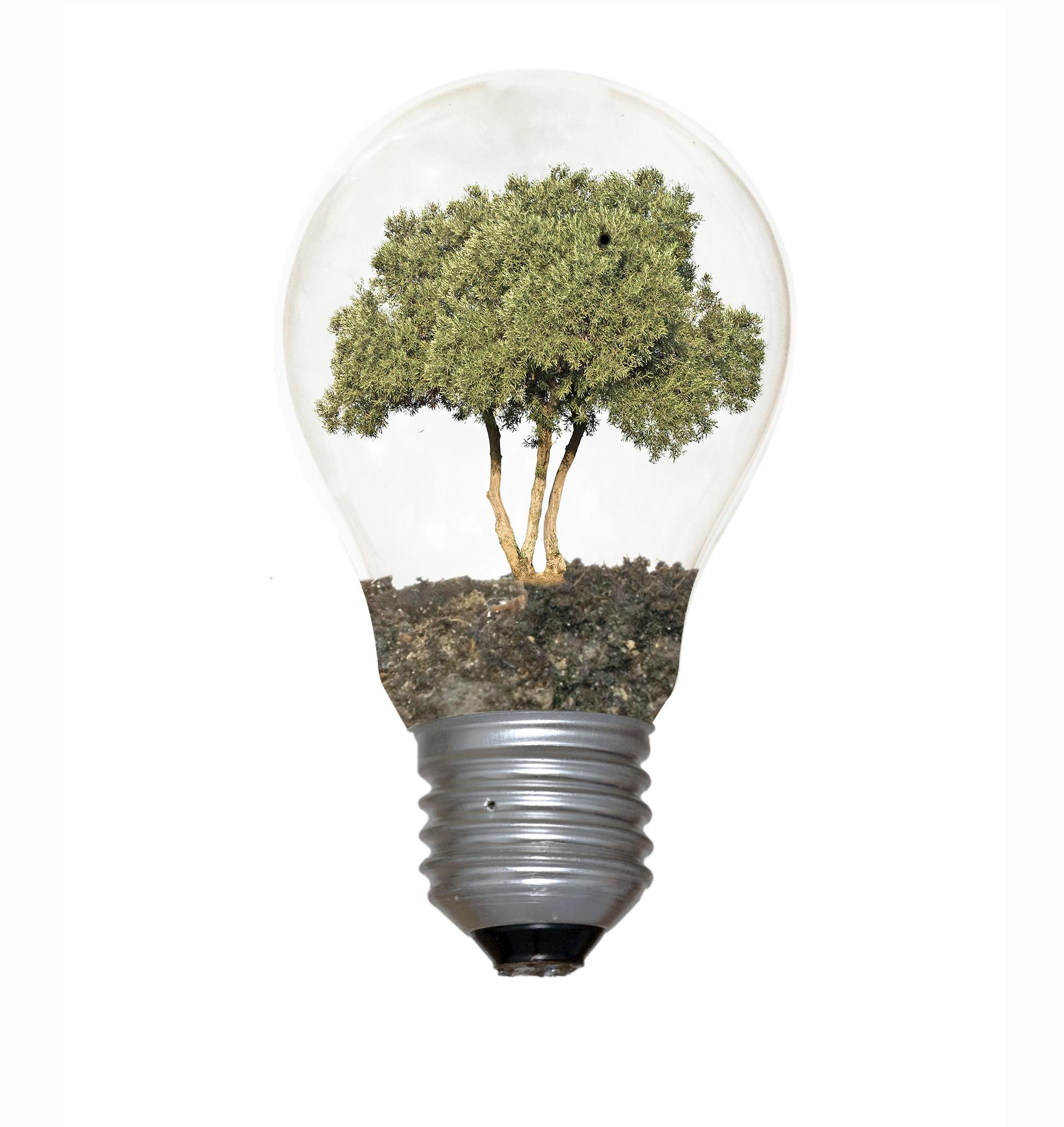 Plant intelligence