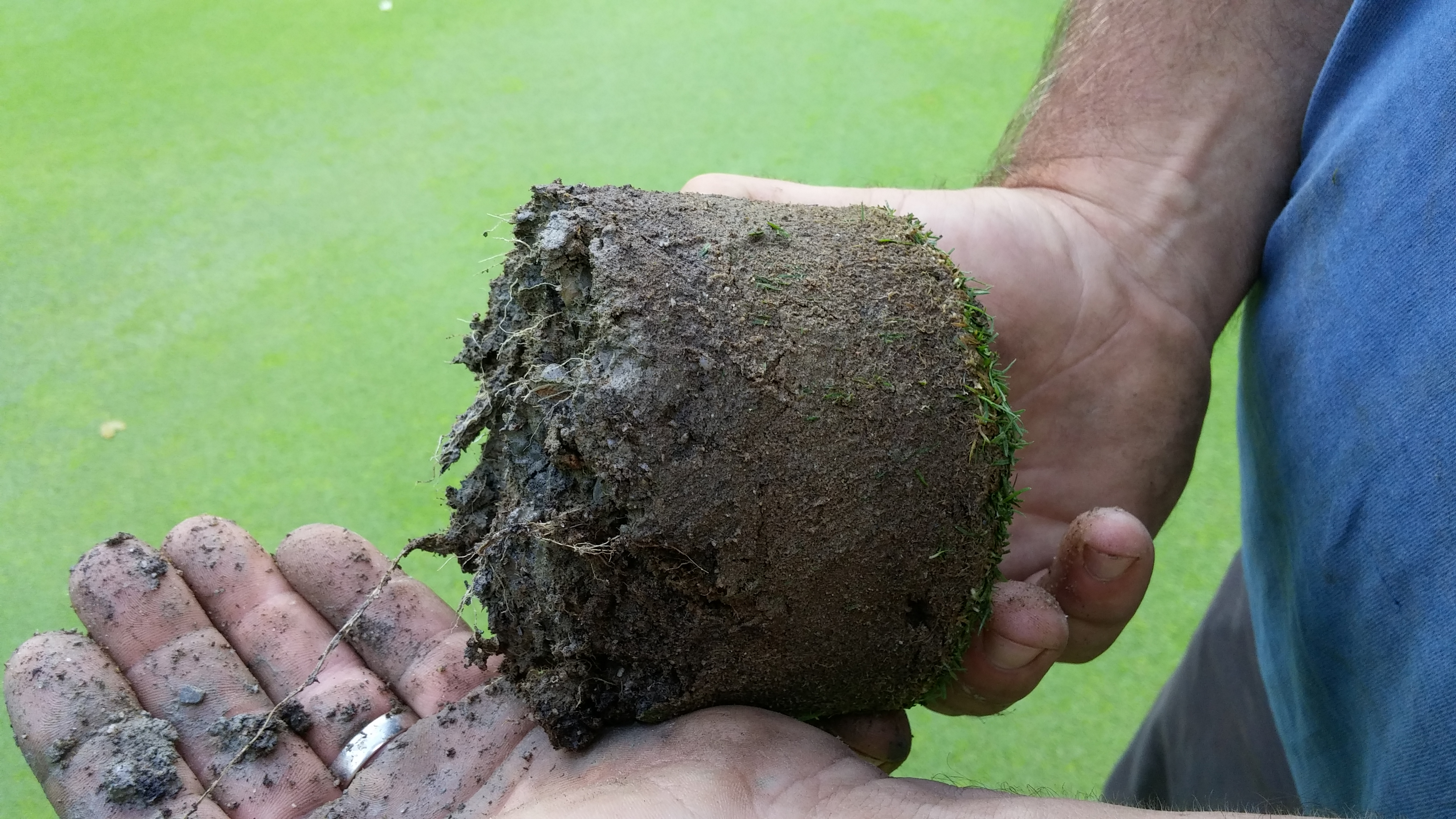 Why Are Roots Important To Turf Health?