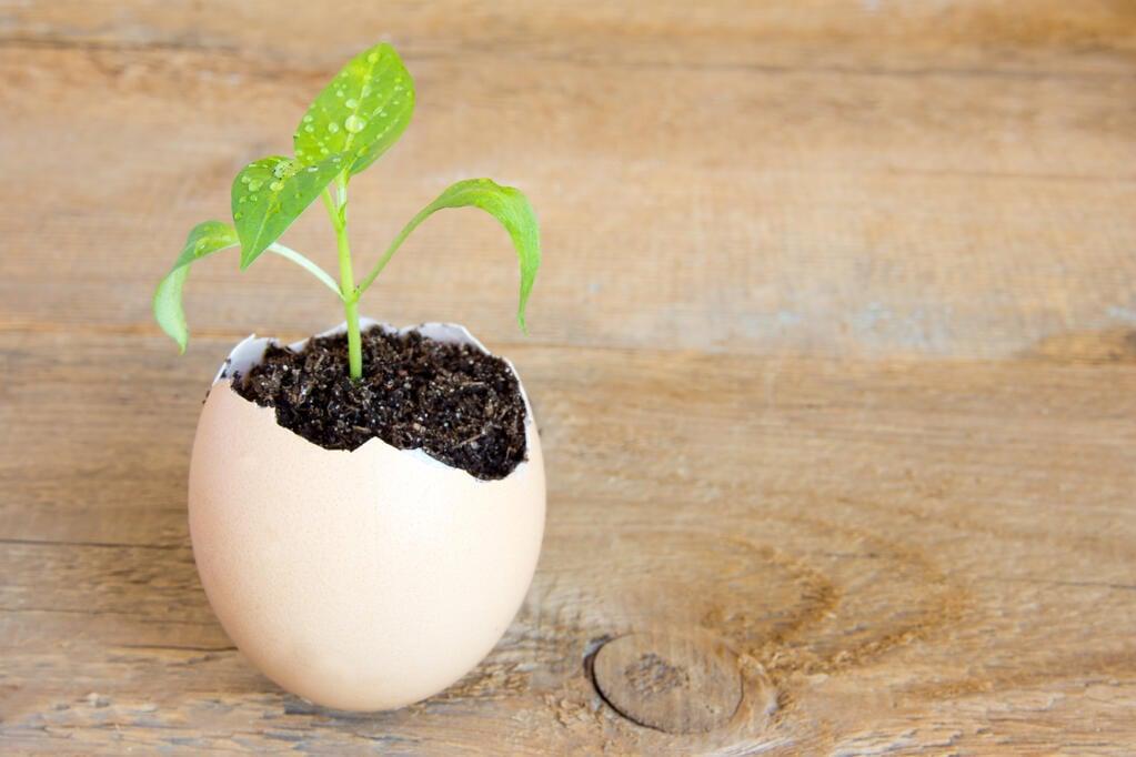 egg_+_plant