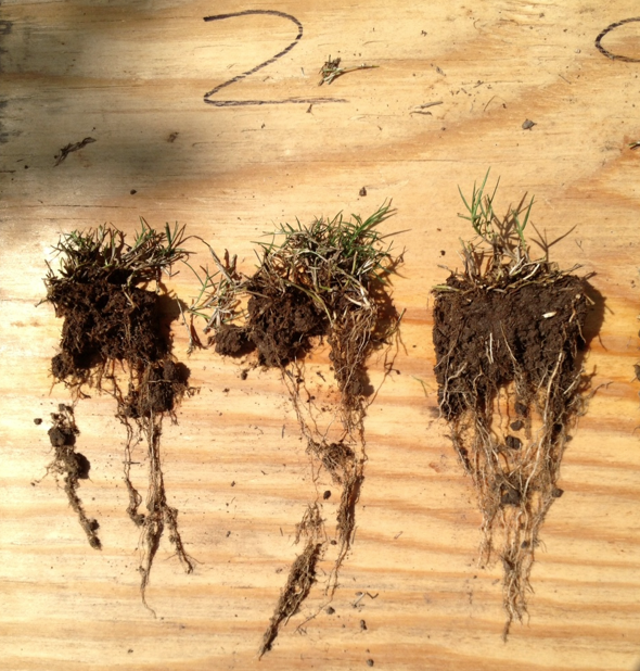 Holganix roots comparison