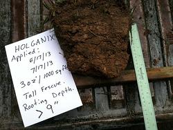 Holganix Roots