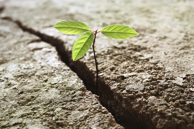 tree_overcomes_odds