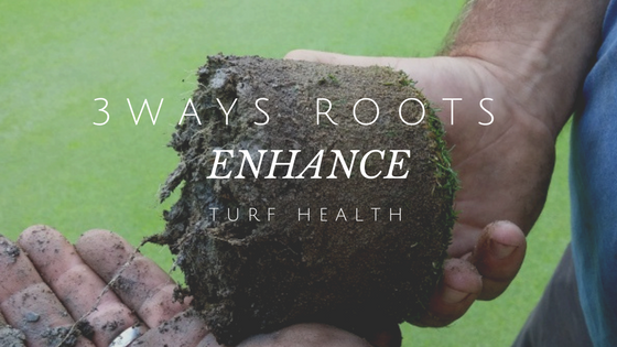 TURF_ROOTS