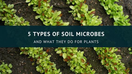 5_types_0f_microbe
