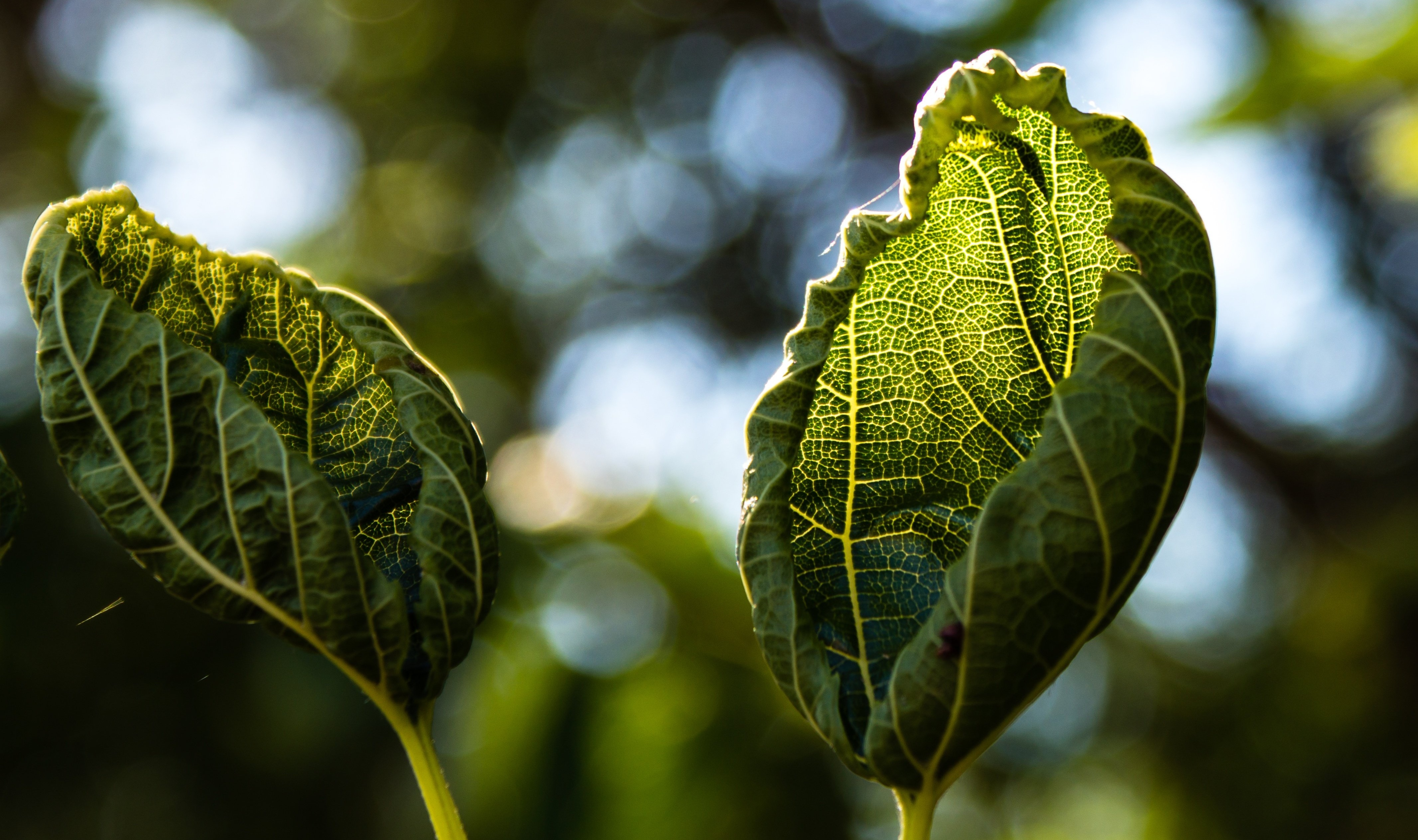 plant wilts