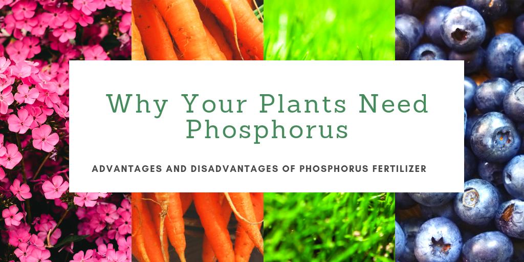 why your plants need phosphorus