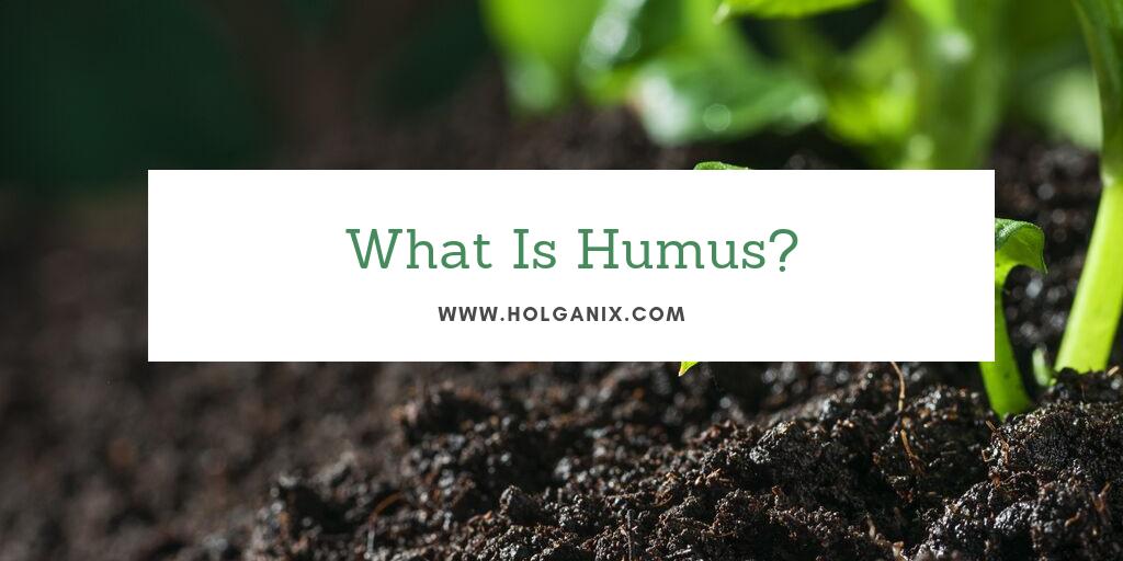 what is humus