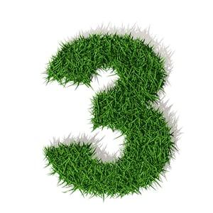 Grass_3.jpg