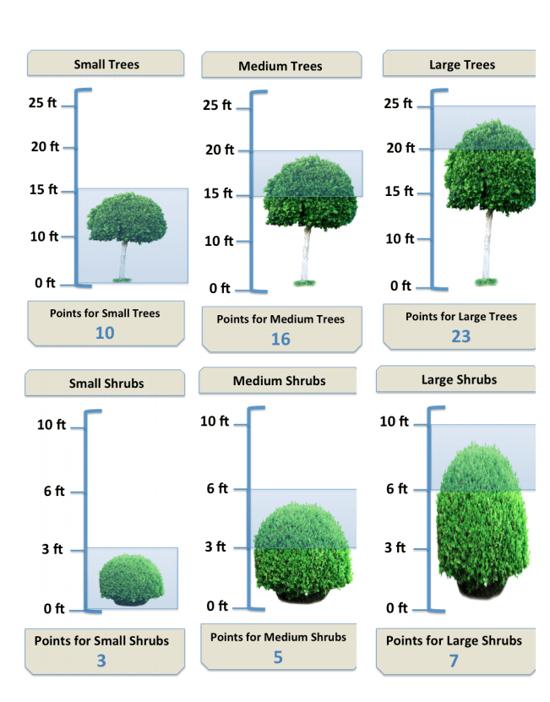 tree and shrub program