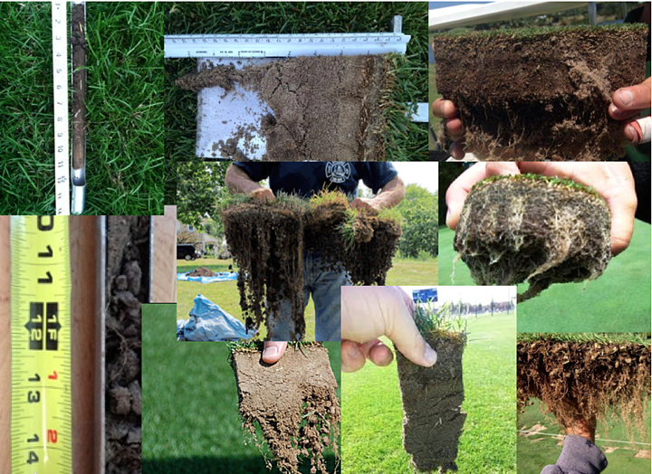 improve turf roots