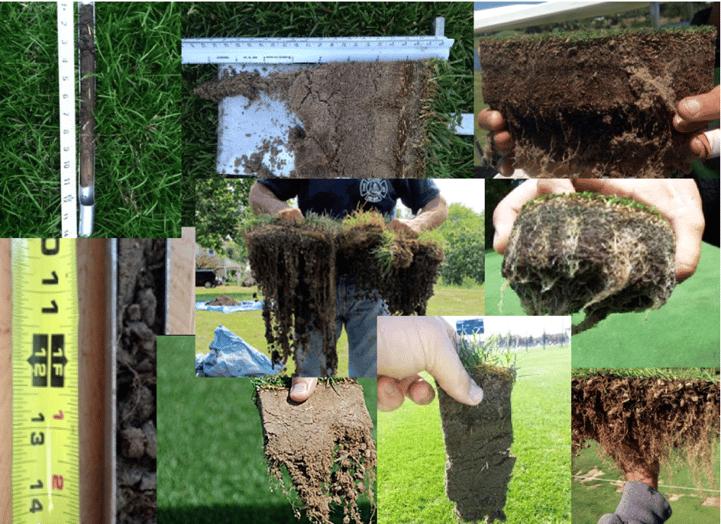 improve turf roots