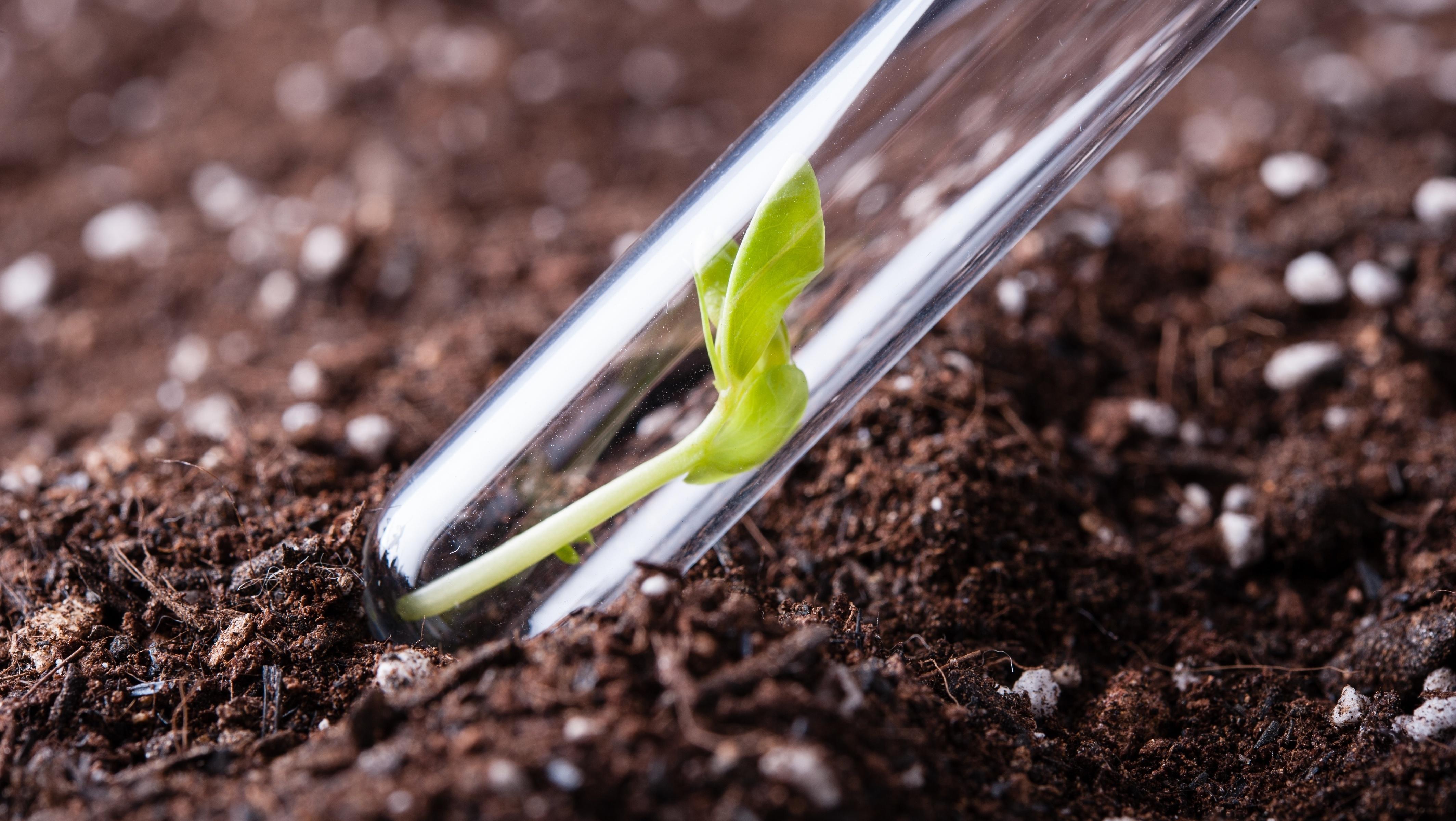 Stock Test Tube + Soil and plant-173483-edited.jpeg