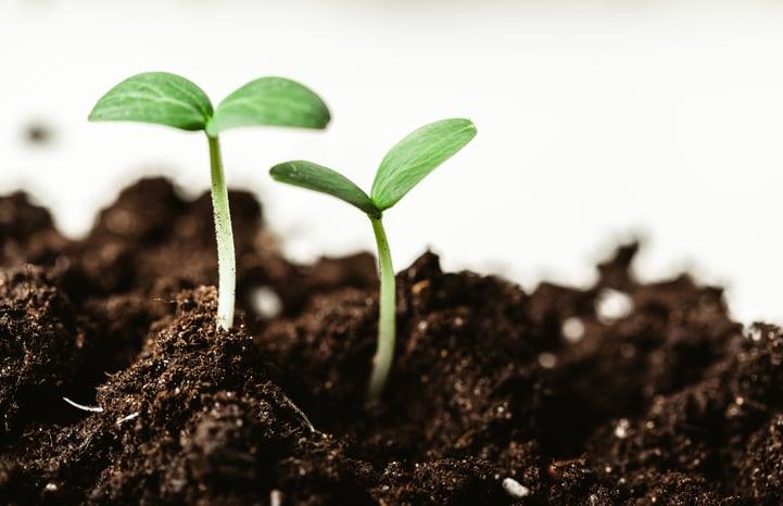 Stock_image_-_young_plants_growing.jpeg