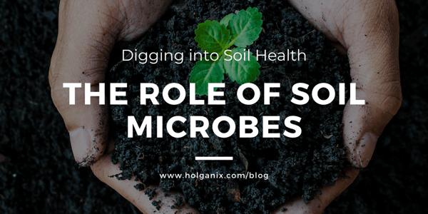 soil microbes build soil health
