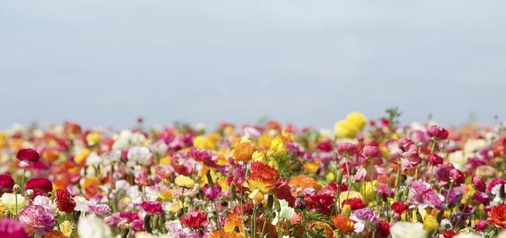 flowers_field-006796-edited.jpg