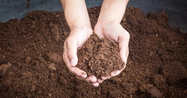 healthysoil-964129-edited.jpg