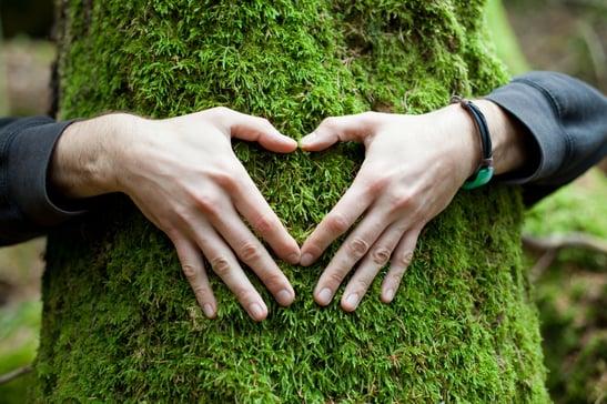 love_the_tree
