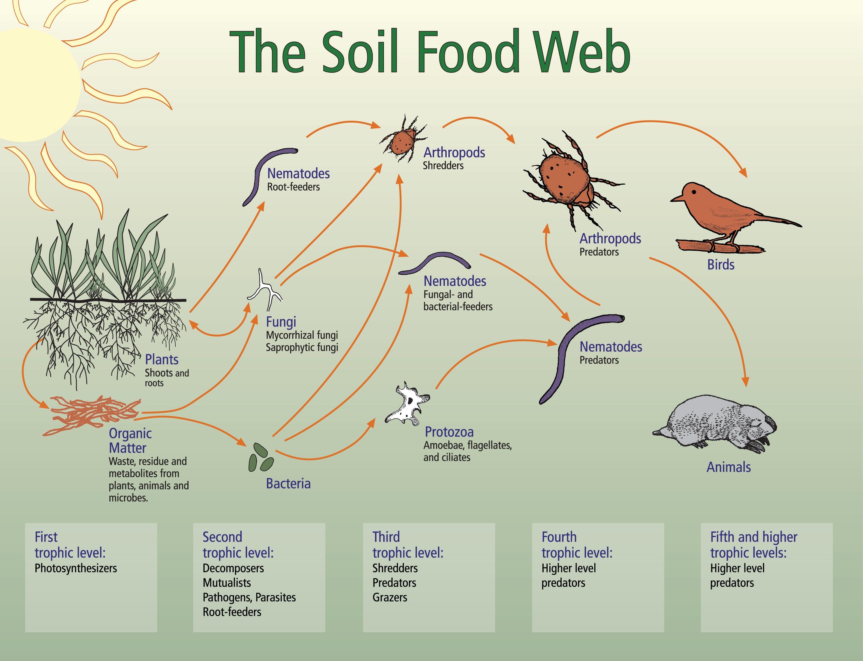 soil_food_Web
