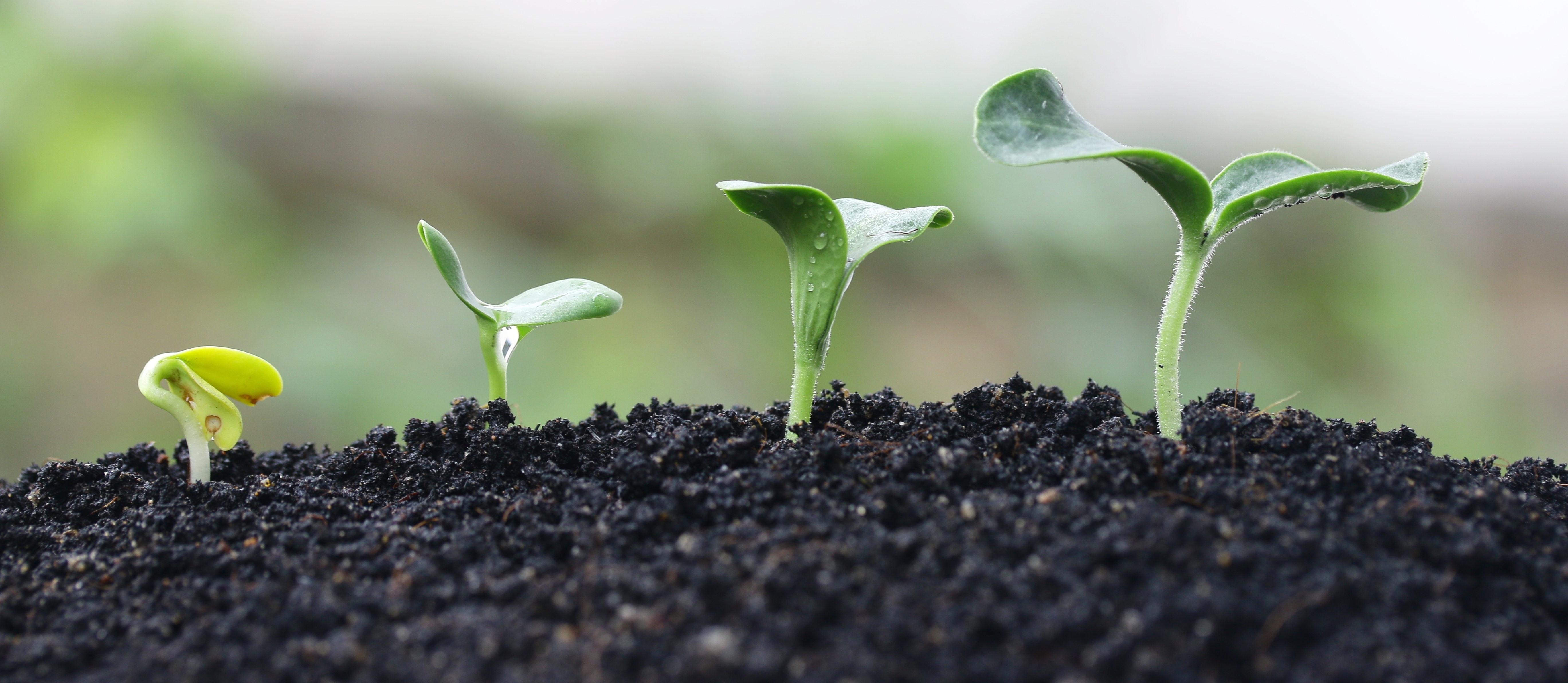 plant_growing_stock_image-554179-edited.jpg