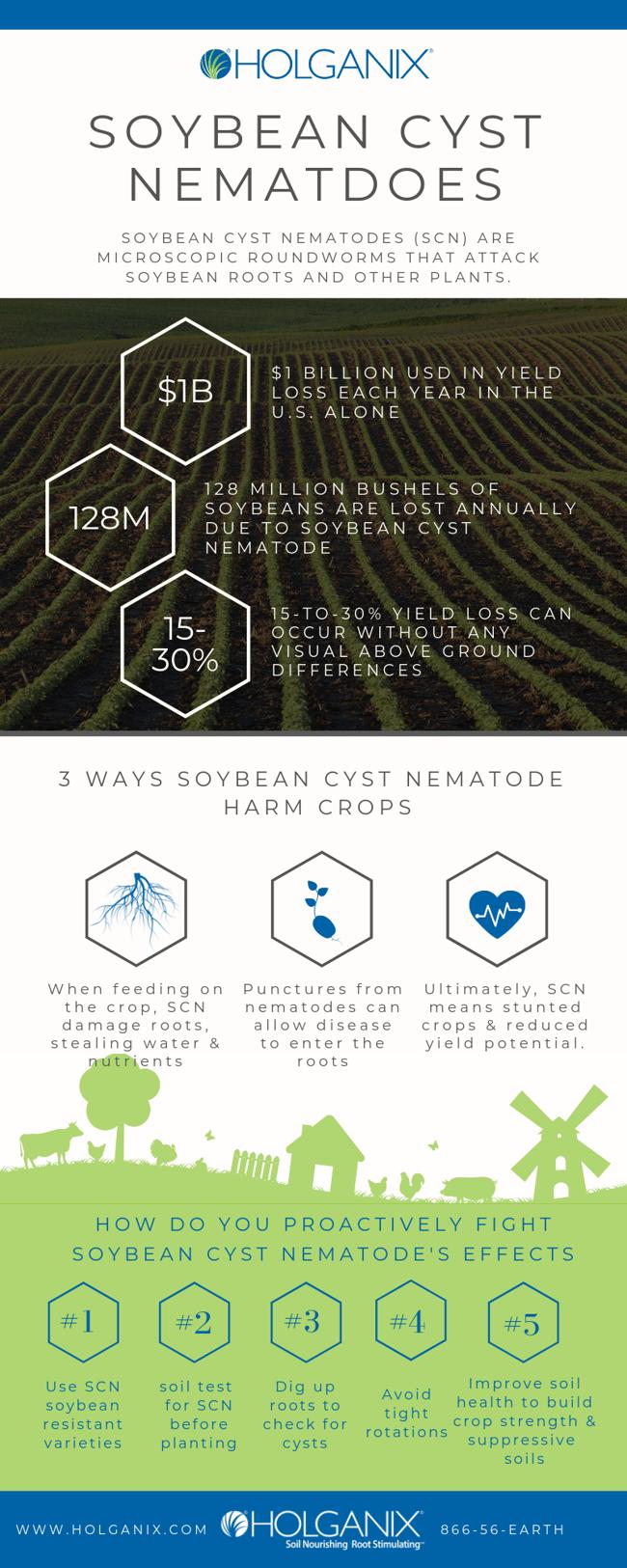 Soybean cyst nematode infographic