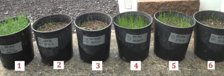 turf seed germination