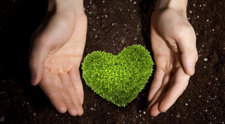 Heart_soil-964029-edited.jpg