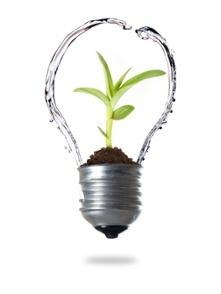 Water__Plant__Lightbulb-12.jpg