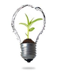 Water__Plant__Lightbulb.jpg