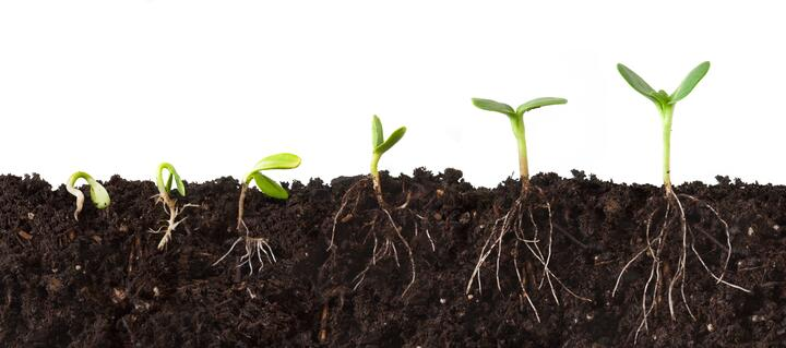 plant_auxin