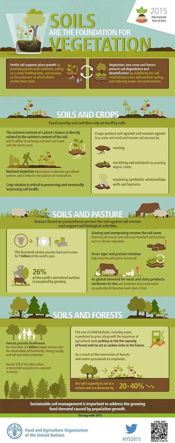soil-foundation