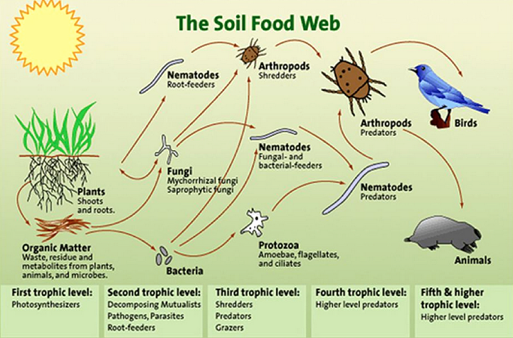 soil_food_web.png