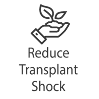 transplant shock