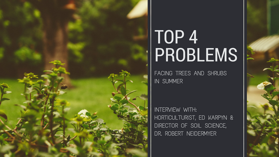 4 Problems Facing Trees & Shrubs In Summer