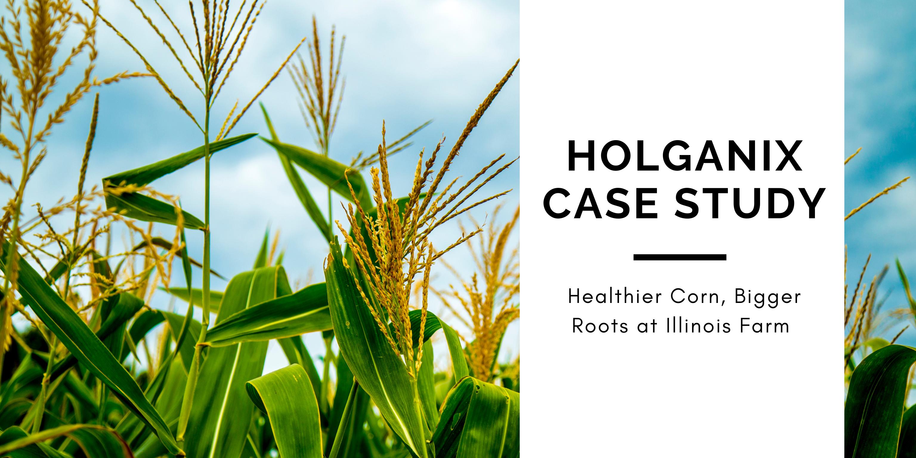 Corn case study