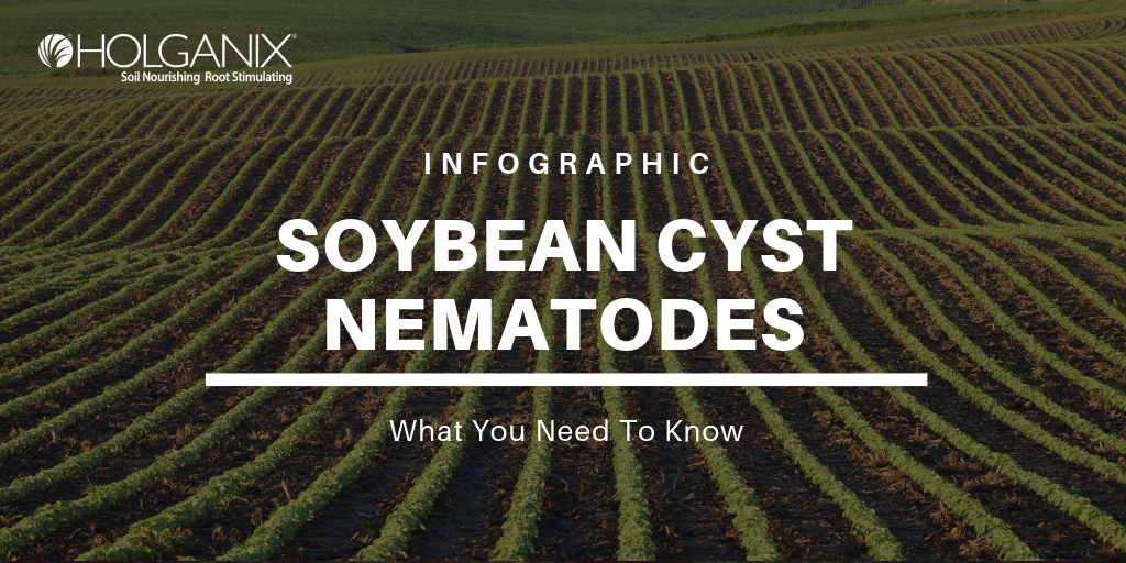 Soybean Cyst Nematodes: What You Need To Know [INFOGRAPHIC]