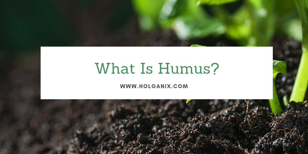what is humus