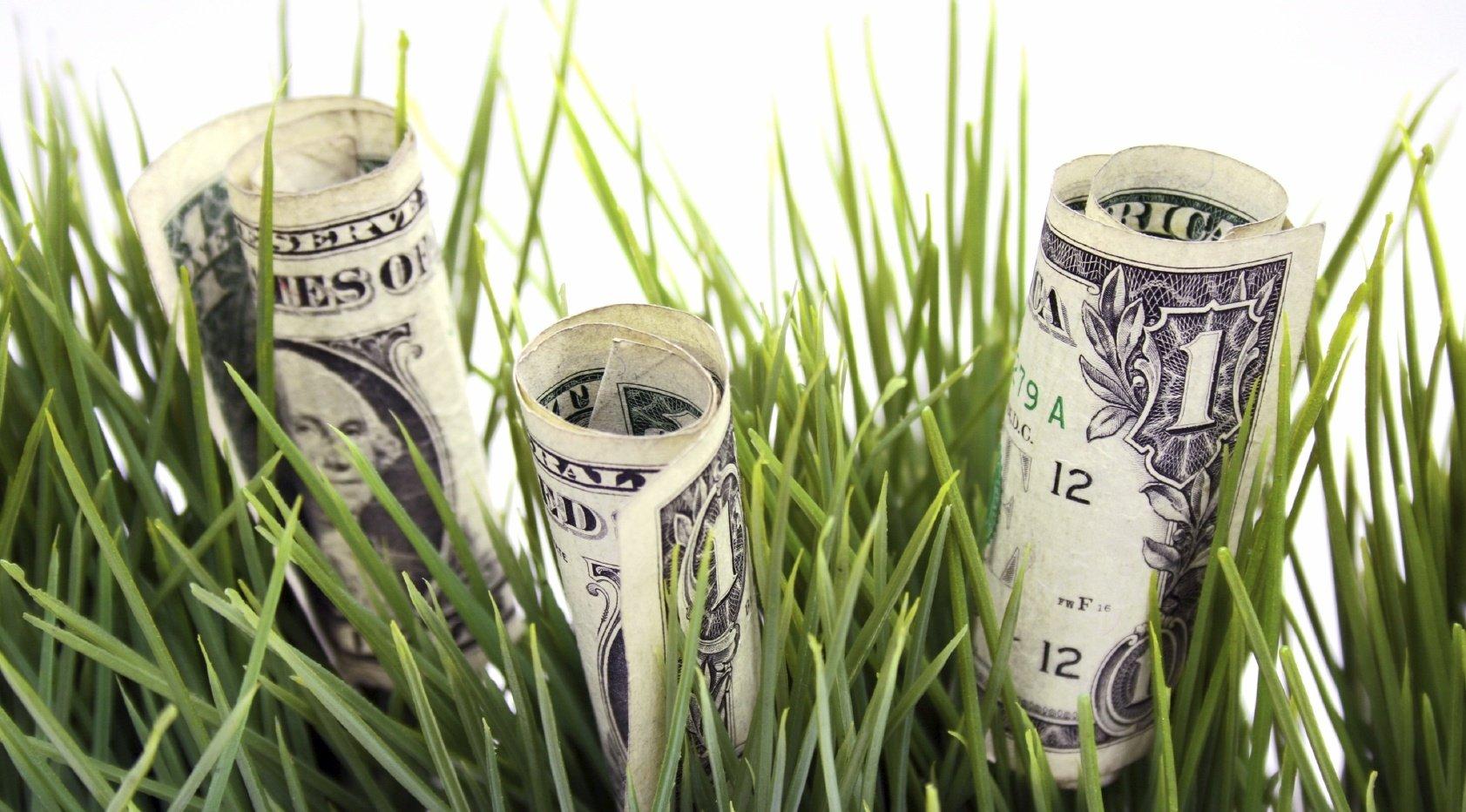 Money_grass-526020-edited.jpg