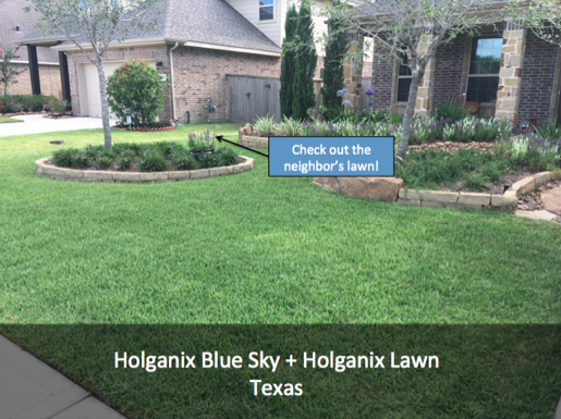 What happens when you combine Holganix Blue Sky & Holganix Refrigerated?