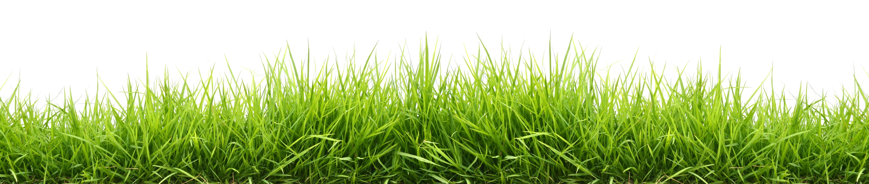grass-024274-edited.jpeg